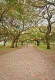 Batterijpark, gangmanier Charleston, S C royalty-vrije stock fotografie