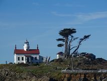 Battery point lighthouse with trees stock images