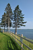 Battery Provincial Park. Pine trees and a wooden fence next to the water at Battery Provincial Park in Nova Scotia royalty free stock photography