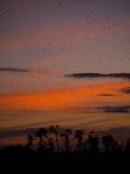 Battes au coucher du soleil Image libre de droits