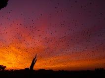Battes au lever de soleil Image libre de droits