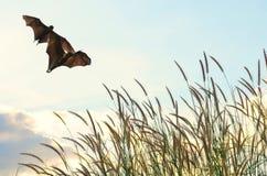 Battes pilotant au printemps le ciel de saison pour l'utilisation de fond Photographie stock