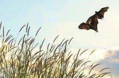 Battes pilotant au printemps le ciel de saison pour l'utilisation de fond, Halloween Photographie stock