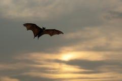 Batti le siluette con illuminazione del tramonto - festival di Halloween Fotografie Stock Libere da Diritti