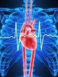 Battito cardiaco Fotografia Stock Libera da Diritti