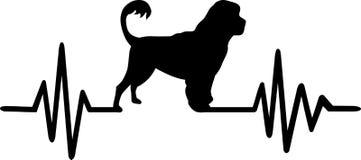 Battito cardiaco portoghese del cane da caccia in palude Immagini Stock Libere da Diritti