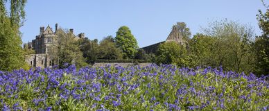 Battle Abbey in East Sussex Panorama. Panoramic view looking over the Bluebells towards Battle Abbey and Battle Abbey School, in East Sussex, UK. The fields at stock photo
