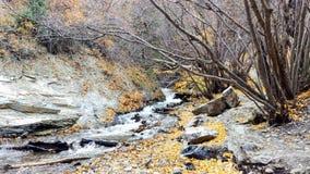 Battle Creek kanjon Utah i hösten arkivbilder