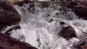 Battle Creek Rapids. A frothy section of Battle Creek near Pleasant Grove, Utah stock footage