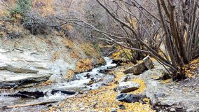 Battle-Creek Schlucht Utah im Herbst Stockbilder