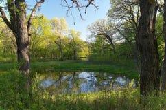 Battle-Creek Teich und Wald Stockbild
