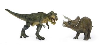 Dinosaur Tyrannosaurus and Triceratops. Battle of dinosaurs of Cretaceous. Shooting Hunt and Roaring of TyrannosaurusT-rex With threat and self defense of Royalty Free Stock Photography