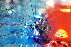 Battle between ice and fire. Dandelion seed sprinkled with colors Stock Images