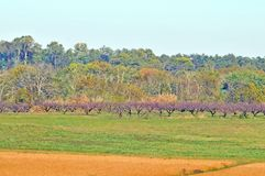 Battle of Monmouth:  Battlefield Orchard. The Battle of Monmouth was essentially fought on ground that was part of several farms. On the north side, there was an Royalty Free Stock Images