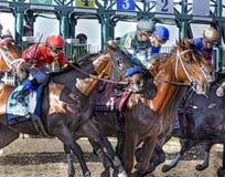 The 2017 Cotillion Stakes stock photos