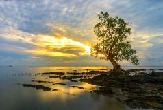 Battle of  tree sunrise riau indonesia. Battle of  tree sunrise beach kepulauan riau indonesia Indonesia Royalty Free Stock Image