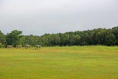 Battlefield of Shiloh Stock Photos