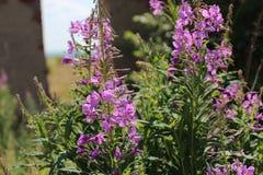 Battuta di fioritura in natura Fotografia Stock Libera da Diritti