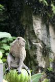 Batu caves monkey Royalty Free Stock Photography