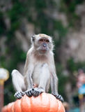 Batu Caves Monkey Stock Photo