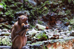 Batu-Höhlen Lizenzfreie Stockfotos