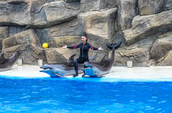 BATUMI, GEORGIA-JULY 9 2015 Instructors perform with trained dolphins inthe Batumi Dolphinarium.  Stock Image