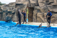 BATUMI, GEORGIA-JULY 9 2015 Instructors perform with trained dolphins inthe Batumi Dolphinarium Stock Photo