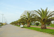 BATUMI, GEORGIA MAY 25, 2015. Bicycle path and green palms Royalty Free Stock Photography