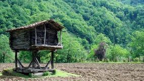 Batumi, Gruzja/12 15 2017 Rolniczych ekosystemów w Gruzja zbiory