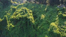 batumi ogród botaniczny zbiory