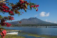 Batur bakgrund Bali för sjö- och Batur vulkan royaltyfria bilder