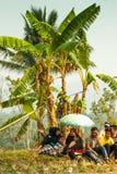 Batusangkar,印度尼西亚, 2015年8月29日:准备好两头的母牛母牛种族Pacu Jawi,西部苏门答腊, 库存图片