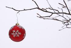 Bauble on a Branch Outside Stock Photos
