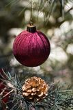 Bauble on Christmas tree Stock Images