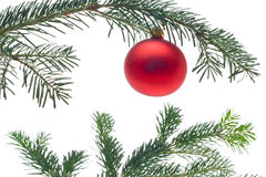 Bauble on christmas tree Royalty Free Stock Photos