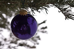 Bauble on christmas tree Royalty Free Stock Images