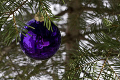 Bauble on christmas tree Stock Photography