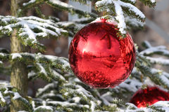 Bauble on fir. Red Bauble on Christmas Tree with Reflection Stock Image