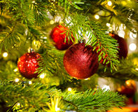 Bauble Ornament in a real Christmas tree Royalty Free Stock Photo