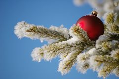 Bauble Royalty Free Stock Photography