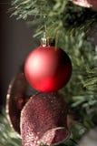 Bauble vermelho de encontro à árvore de abeto verde Imagem de Stock Royalty Free