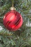 Bauble vermelho na árvore Fotos de Stock Royalty Free