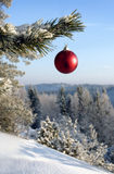 Baubles. Hanging on a christmas tree covered with snow royalty free stock photos