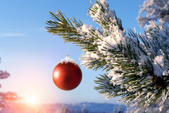Baubles hanging on a christmas tree Royalty Free Stock Images