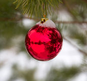 Baubles hanging on a christmas tree Royalty Free Stock Photography
