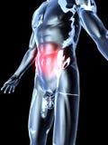 Bauch-Schmerz - Anatomie lizenzfreie abbildung