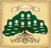 Bauen Sie Ihren eigenen Stammbaum auf Stockbild