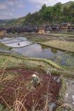 Bauer, der in den Reispaddys nahe chinesischen ethnischen Minderheiten arbeitet Lizenzfreies Stockfoto