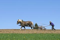 Bauer, der mit Pferd und Pflug, Deutschland pflügt Stockfotografie
