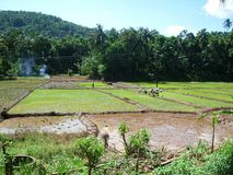Bauerarbeit über Reisfelder im Freien Lizenzfreie Stockbilder